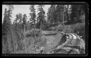 Primary view of object titled '[A railroad track winding through a forest]'.