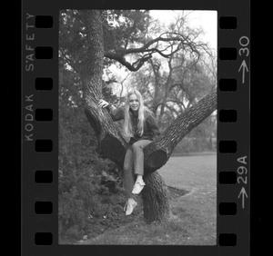 Primary view of object titled '[Dana Long posing in a tree]'.
