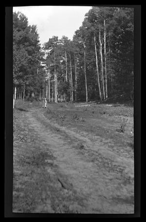 Primary view of object titled '[Two women walking on a trail in a forest]'.