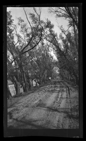 Primary view of object titled '[Photo of a dirt road in a forest]'.