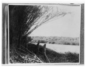 Primary view of object titled 'Cane Break at Gum Hollow'.