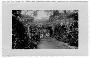 Primary view of object titled '[Hardy Hall - The Rose Walk]'.