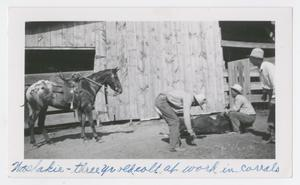 [Cowhands and Horse Branding]