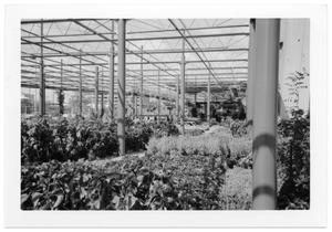 Primary view of object titled '[Plants Dallas Farmer's Market]'.