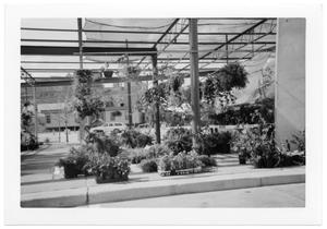 Primary view of object titled '[Plants at Dallas Farmer's Market]'.