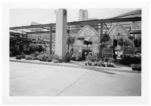 Primary view of object titled '[Plants at Farmer's Market]'.