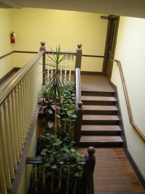 Primary view of object titled '[Plants and Stairs]'.