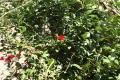 Photograph: [Flower Bush]