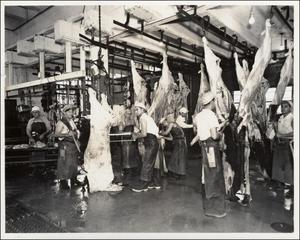 Primary view of object titled '[View of crew working in slaughter room of the Austin Abattoir]'.