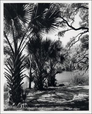 Primary view of object titled '[Laguna Gloria Grounds]'.