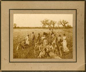 Primary view of object titled '[Group of Cotton Pickers]'.