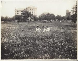 Primary view of object titled 'University of Texas grounds'.