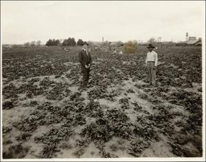 Primary view of object titled '[Spinach Farming]'.