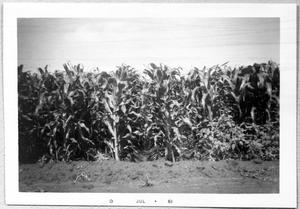 Primary view of object titled '[Corn Fields]'.
