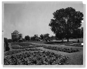 Primary view of object titled '[Rose Garden at Lake Cliff Park]'.
