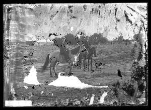 Primary view of object titled '[Two Men on Horseback]'.