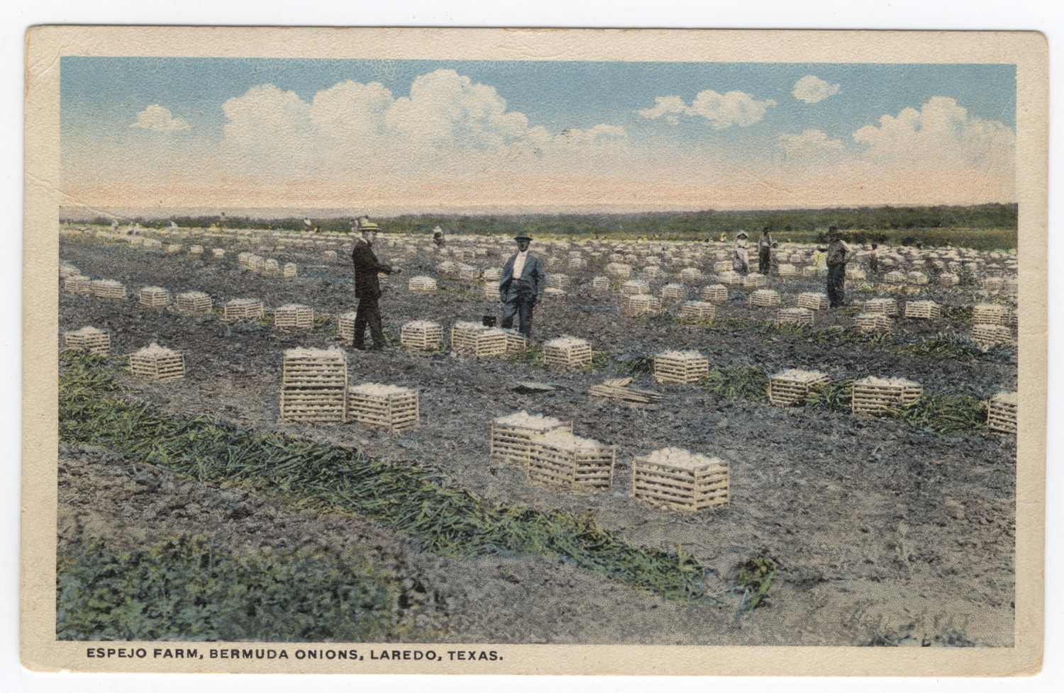 [Espejo Farm, Bermuda Onions, Laredo, Texas]                                                                                                      [Sequence #]: 1 of 2