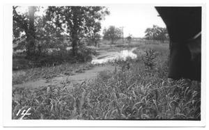 Primary view of object titled '[Trinity River Flood]'.