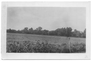 Primary view of object titled '[Wheat Washed Down]'.