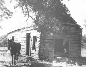 Primary view of object titled 'Torian Log Cabin with a Horse in Front Yard'.