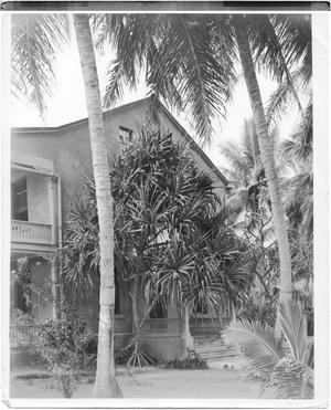Primary view of object titled 'Bungalow and Palm Trees'.