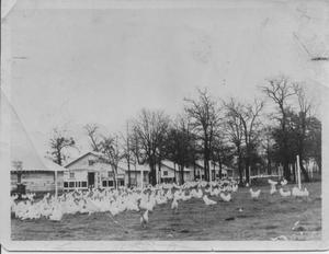 Primary view of object titled 'Jesse James Wheat's Chicken Farm'.