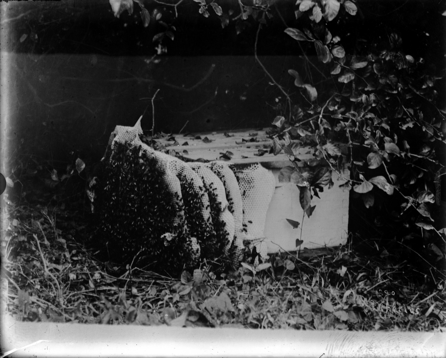 [Commercial bee hive]                                                                                                      [Sequence #]: 1 of 1