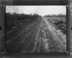Primary view of object titled '[Dirt road past corn field]'.