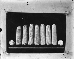 Primary view of object titled '[Corn]'.