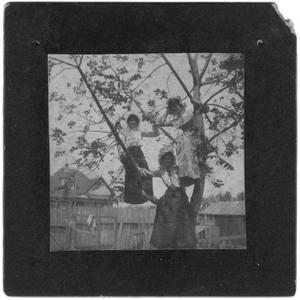 Primary view of object titled 'Three Women up in a Tree'.