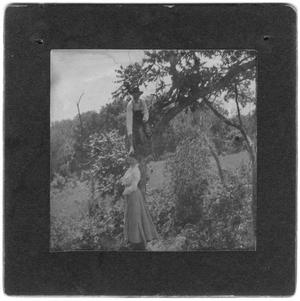 Primary view of object titled 'A Women and a Man in a Tree'.