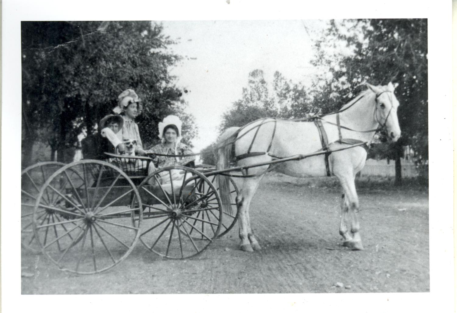 Seiders Children in a Horse-drawn Surrey                                                                                                      [Sequence #]: 1 of 2