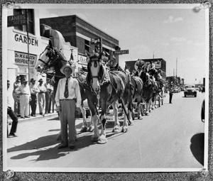 Primary view of object titled '[The Budweiser Clydesdale Team]'.