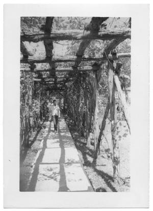 Primary view of object titled '[Boys Walking Under a Grape Arbor]'.
