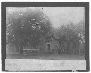 [Large Tree in Front of a Wooden Cabin]