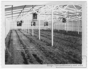 Primary view of object titled '[Photograph of Young's Greenhouse]'.