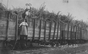 "Primary view of object titled '[""Carloads of Sweetness"", train cars full of sugarcane]'."