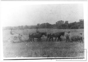 Primary view of object titled '[Grain Harvest at Frank R. Hurn Farm]'.
