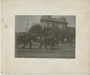 Primary view of object titled '[Gentry's Trained Animal Show in Parade]'.