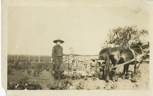 Primary view of object titled '[Horse and Buggy]'.
