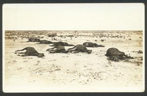 Primary view of object titled '[Innocent Victims of Villa's Raid in Columbus, NM]'.