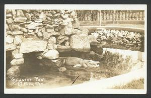 Primary view of object titled '[Alligator Pool]'.
