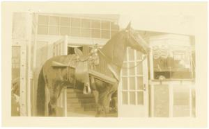 Primary view of object titled 'Horse at the Rembert Box Office'.