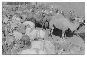 Primary view of object titled 'Ringling Brother's Camels and Horses'.