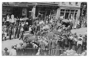 Primary view of object titled 'Ringling Brothers Circus Zebras'.