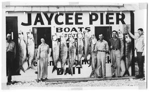 Primary view of object titled '[Ten Tarpon at Jaycee Pier]'.
