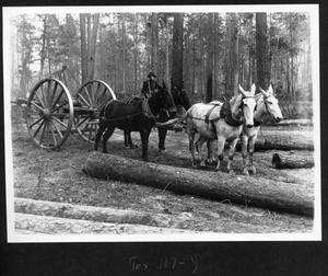 Primary view of object titled '[Southern Pine Lumber Company Slip Tongue Log Skidder and Team]'.
