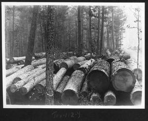 Primary view of object titled '[Cut Timber on the Right of Way - 2]'.