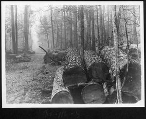 Primary view of object titled '[Timber Stacked in the Woods]'.