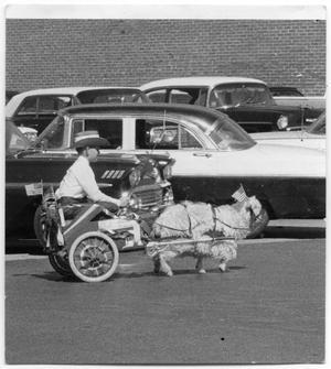 [Boy in cart pulled by goat]